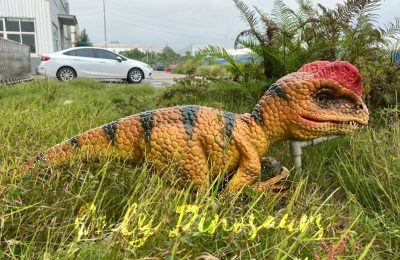 Let's your kids grow with the dinosaur